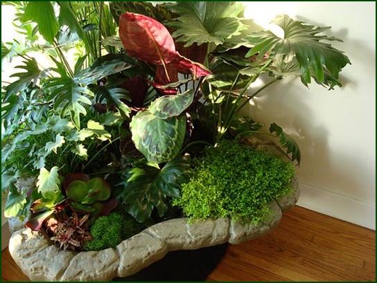 Fotos de decora o de jardins for Fotos de plantas de interior