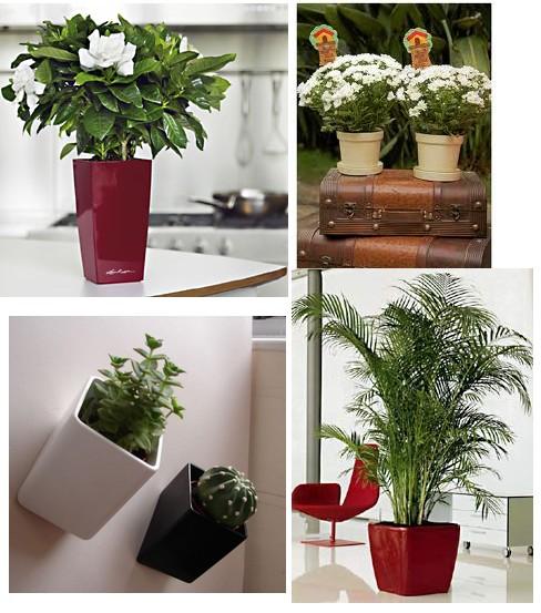 Fotos de vasos decorativos for Plantas para interiores oscuros