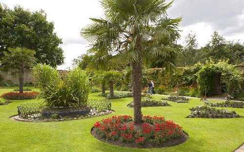 Jardins decorados com palmeiras - Tipi di palme da giardino ...